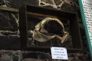 Mandíbula de tiburón