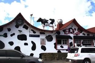 Y una cafetería tiene una vaca. Observen que la decoración imita a una piel de vaca blanca con manchas negras