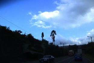 Curiosa palmera que se abre como un abanico