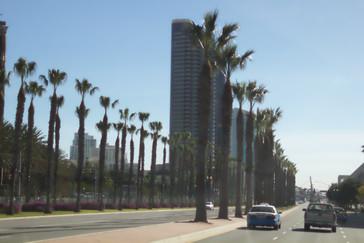 Una de sus grandes avenidas con palmeras