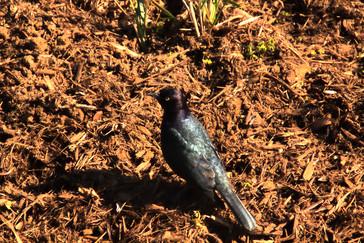 Pájaro de la zona