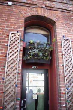 Edificio con plantas sobre el dintel de la puerta