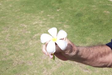 Flor de francapán
