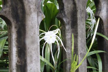 Bonita flor en los jardines de la catedral