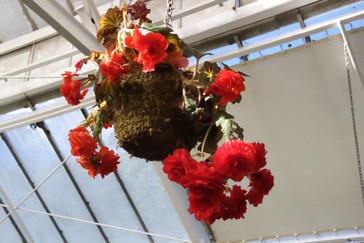 Incluso de los techos cuelgan tiestos con preciosas flores