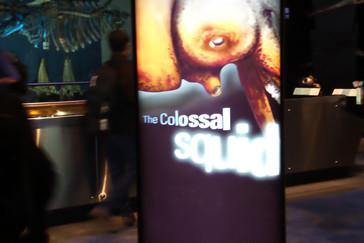 Una de las atracciones del museo es un calamar gigante.