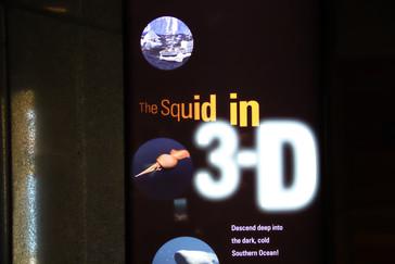 También tienen una película en 3D, con gafas polarizadas, donde se ve el calamar gigante nadando y comiendo