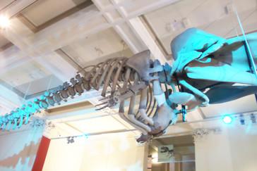 Esqueleto de ballena colgado a la entrada