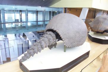 Armadillo gigante. ¡Y tan gigante!