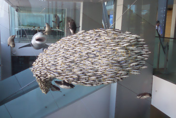 A la salida del museo hay una representación de un cardumen que toma la forma de un enorme pez, para engañar a sus enemigos.
