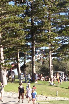Los árboles crecen muy cerca de la playa. En este caso, además, entre dos árboles hay unas ruedas que se mueven con el viento y que son otra escultura