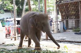 Elefante que pertenece al templo