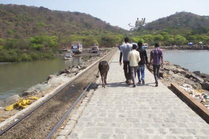 Camino. A la izquierda una vaca sagrada