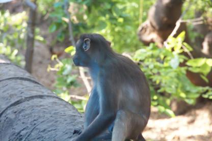 Por el camino sigue habiendo monos. Algunos, como el de la foto, no nos hacen ningún caso