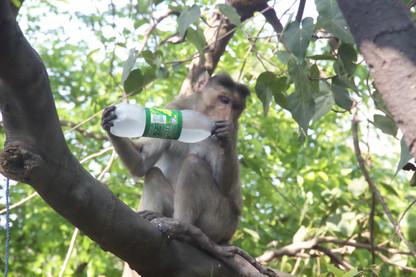 A este mono no le han dado de comer, pero sí de beber