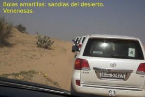 """En el camino hacia el campamento beduino nos encontramos con esas bolas amarillas que se ven abajo a la izquierda. Son lo que nuestro conductor llamó """"sandias del desierto"""" que también son venenosas y si las comen los camellos se ponen enfermos."""