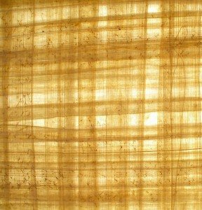 Papiro blanco. Gentilez de wikimedia