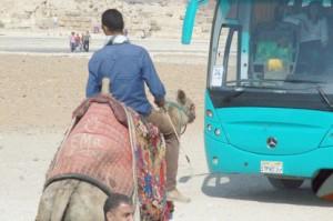 camellos y autobuses