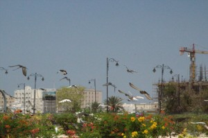 Jardín de flores y aves revoloteando.
