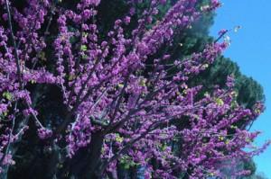 Otra vez los ¿almendros?en flor