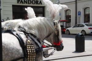 Detalle caballos que pasean turistas