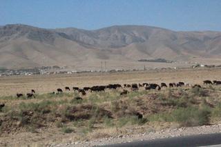Pueblo al fondo y su ganadería en primer plano