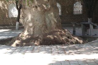 Detalle del tronco