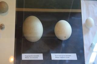 Huevos de pelícano