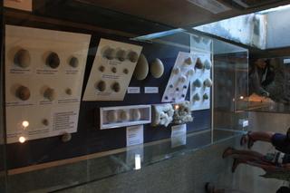 Más huevos en el museo