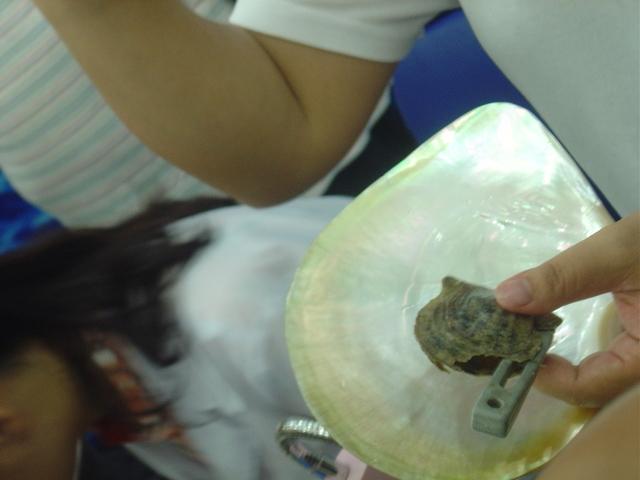 Ya, con la ostra abierta, con unas pinzas y mucho cuidado se introduce la semilla.
