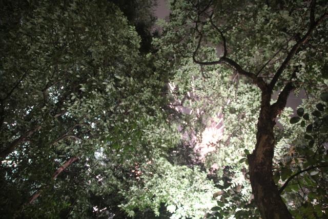Fuegos entre las ramas
