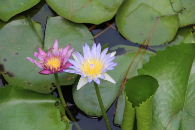 Entorno el Y Thao Garden