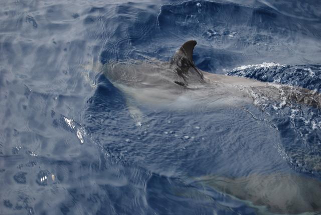 Todavía nos acercamos más a uno de los delfines.