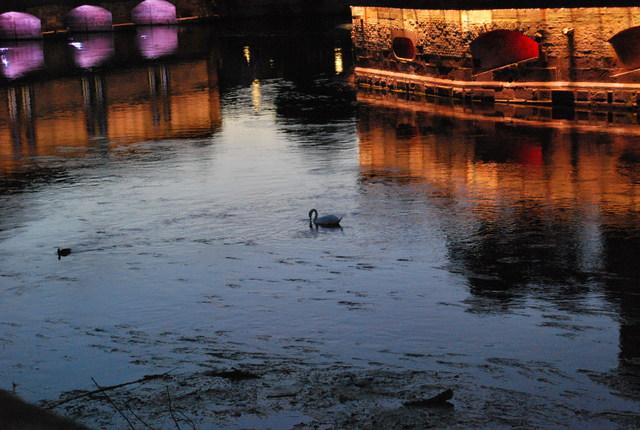 Puentes cubiertos y cisnes en Estrasburgo.