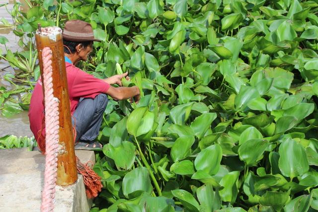 Vegetación en el embarcadero.