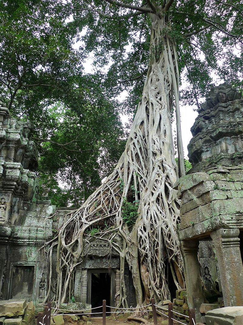 «Tree roots and temple, Ta Prohm, Angkor, Cambodia» de David Sim - originally posted to Flickr as Tree roots and temple, Ta Prohm, Angkor, Cambodia. Disponible bajo la licencia CC BY 2.0 vía Wikimedia Commons - https://commons.wikimedia.org/wiki/File:Tree_roots_and_temple,_Ta_Prohm,_Angkor,_Cambodia.jpg#/media/File:Tree_roots_and_temple,_Ta_Prohm,_Angkor,_Cambodia.jpg