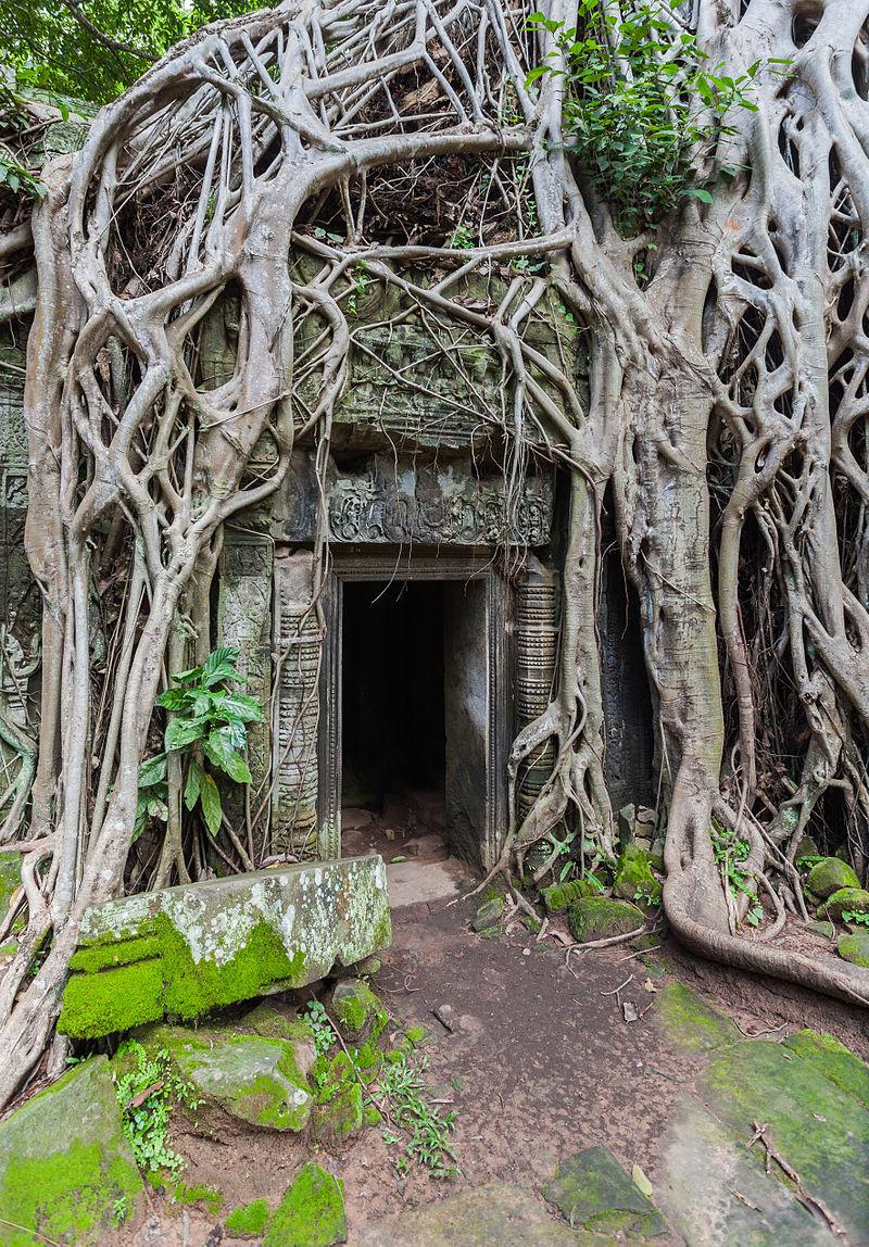 «Ta Phrom, Angkor, Camboya, 2013-08-16, DD 41» de Diego Delso. Disponible bajo la licencia CC BY-SA 3.0 vía Wikimedia Commons - https://commons.wikimedia.org/wiki/File:Ta_Phrom,_Angkor,_Camboya,_2013-08-16,_DD_41.JPG#/media/File:Ta_Phrom,_Angkor,_Camboya,_2013-08-16,_DD_41.JPG