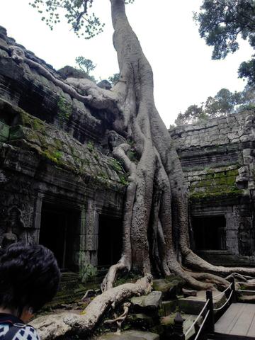 ¡Corre que las raíces quieren agarrarte una pierna!