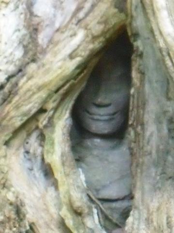 La cara nos mira, escondiéndose tras las cortinas de madera.
